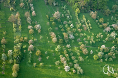 aerial orchards