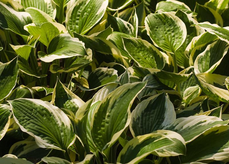2009 06 30_NY Botanical Gardens_0658_edited-1.jpg