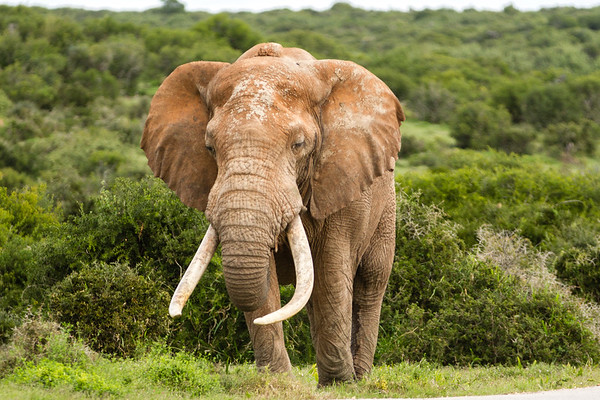 Addo Elephant National Park May 2014