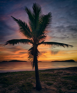 A Palm Tree in an Awesome Sunset