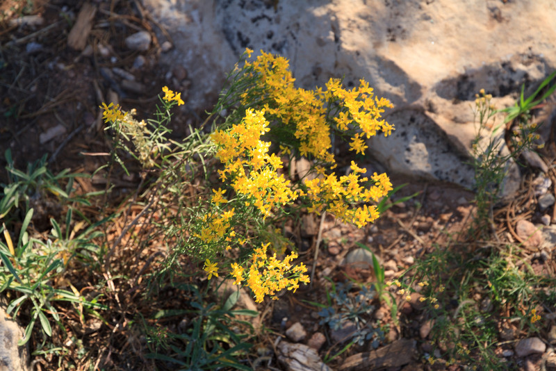 2012_10_02 Grand Canyon 151.jpg