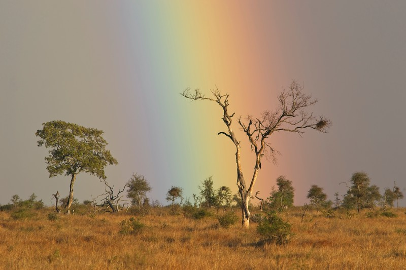 Rain Bow and dry tree.jpg