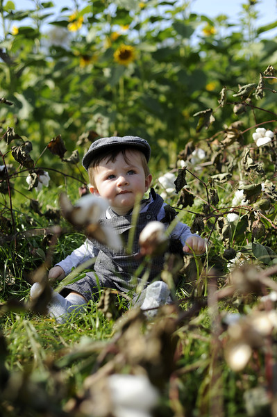 Jack in the cotton field