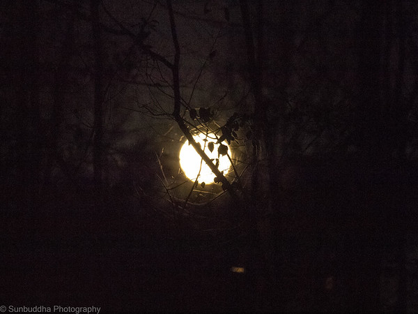 2015-11-25 - Forest Moon