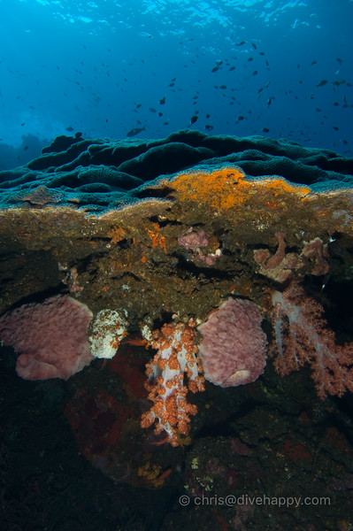 Coral at Manuk, Banda Sea © Chris Mitchell