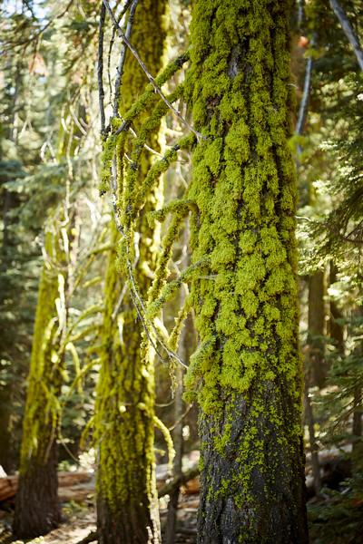 Yosemite-16Sep16-0203_Blue.jpg