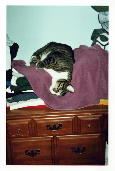 2005_Cats_0002_a.jpg
