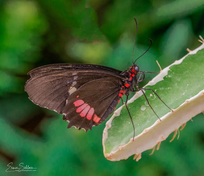 Tucson Botanical Garden 4-25-2018d-.jpg