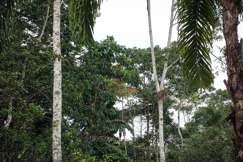 Ecuador-432.jpg