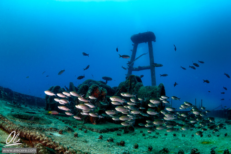 Damsels on the wreck