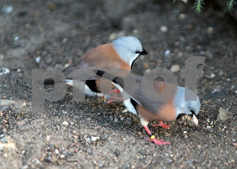 birds 24.jpg