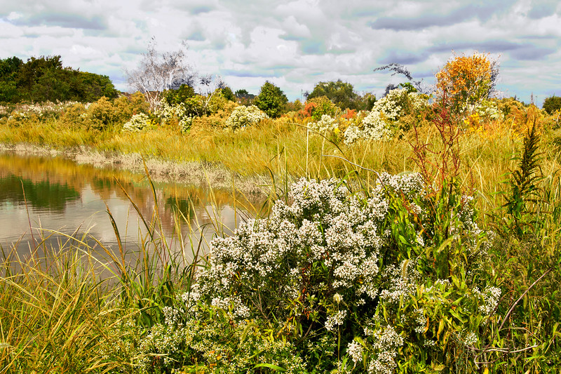 Sept 27_Mill Creek Marsh_9430.jpg