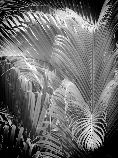13 Palms - No. 4