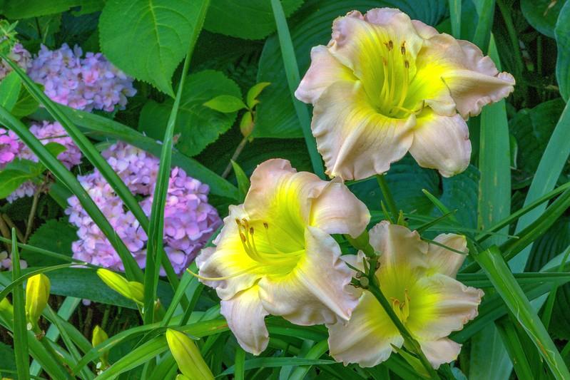 Garden 1, 206.jpg