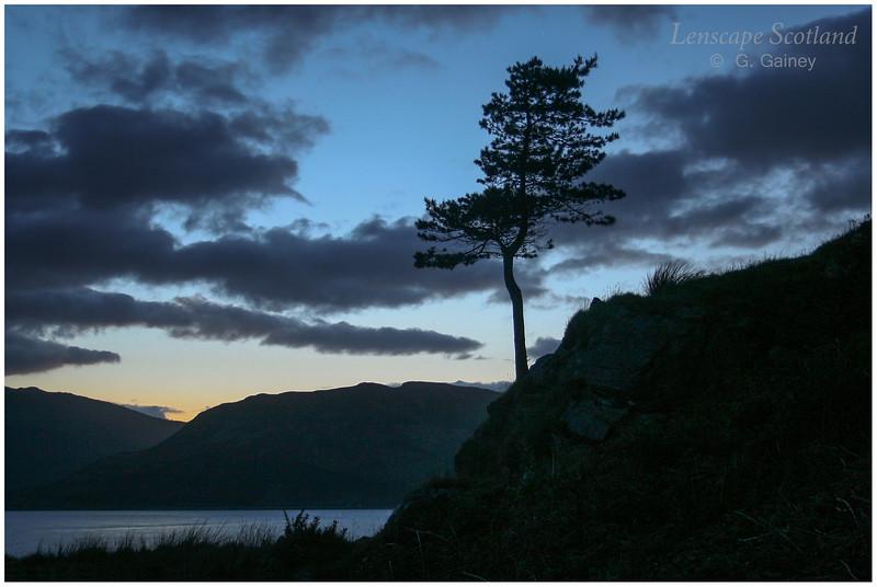 Pine tree silhouette, Glenelg, late evening