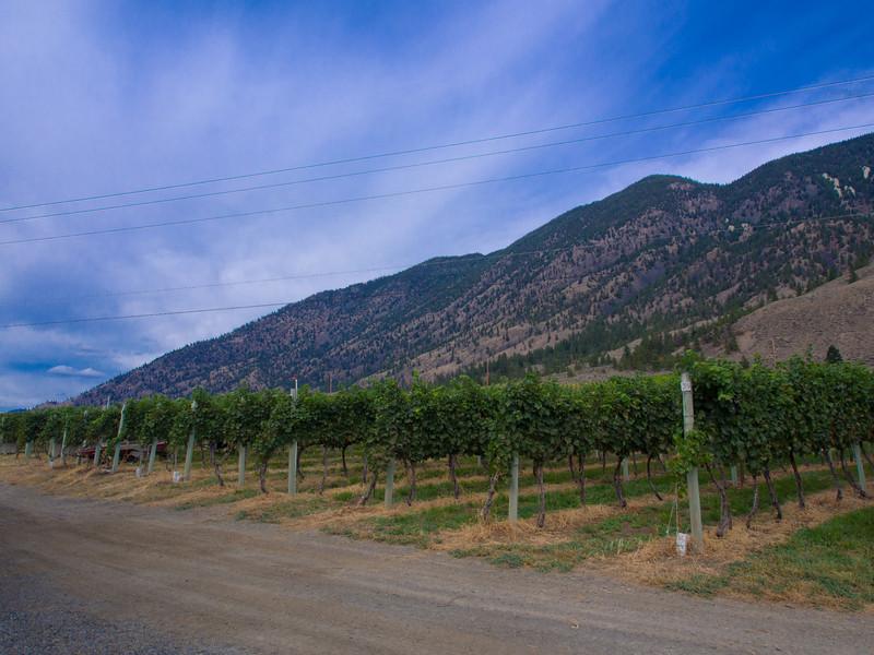 seven stones vineyard 2.jpg