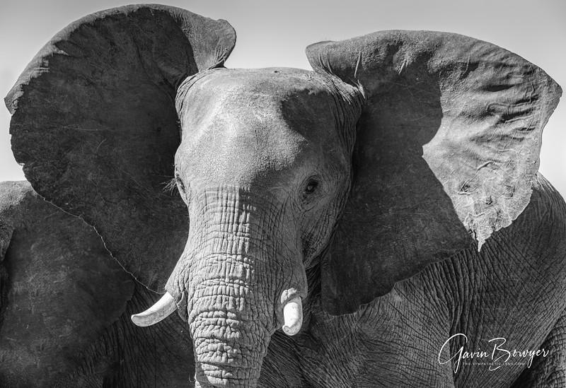 Elephants Botswana-16.jpg