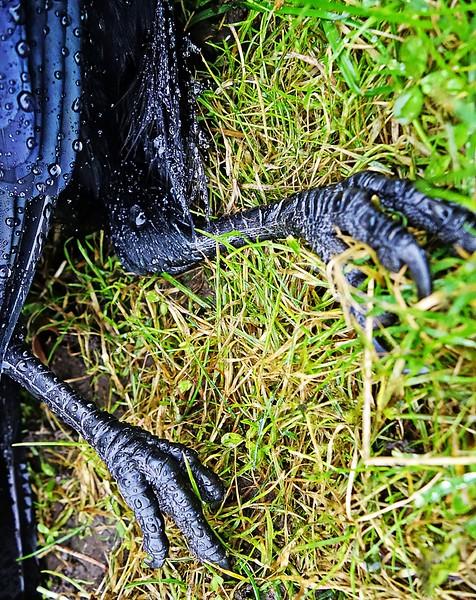 Crow's Feet