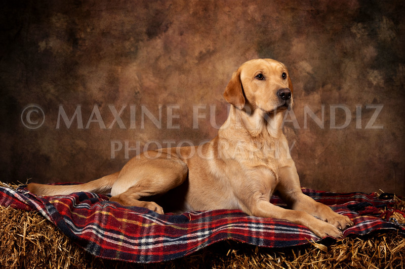 Dogs-4577-Edit.jpg