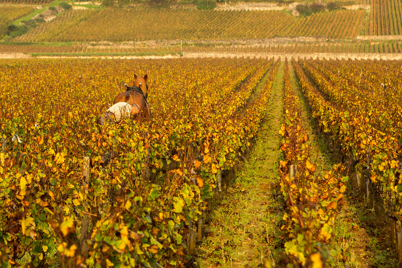 Cultivating the Vineyard