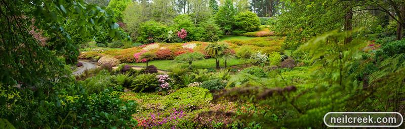 Rhoderdenderon Gardens - 121102