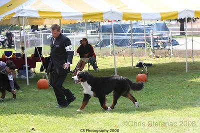 American Bred- Dog