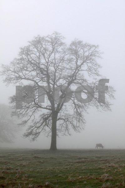 Oak & cow 4197.jpg