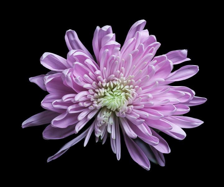 FlowerMacro00019-Recovered.jpg