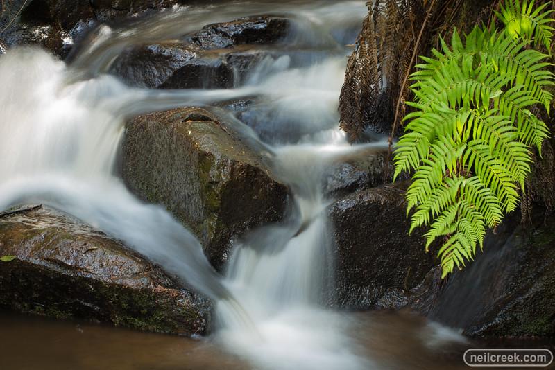 creek151010-030.jpg