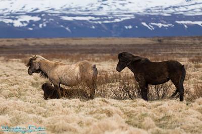Iceland Vistas