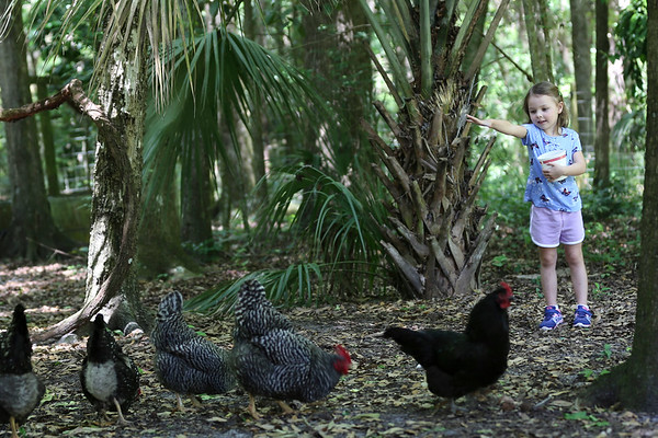 Shiloh's Day on the Florida Cracker Homestead - Getting down with her Florida Pioneer roots!