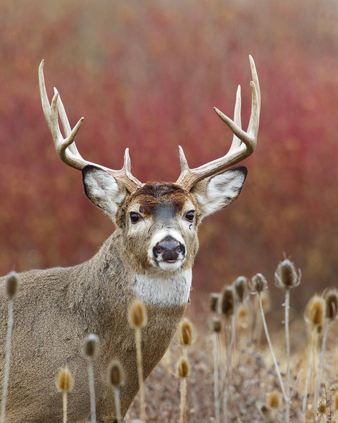 Whitetails in the Wild IMP - 1 (9).jpg
