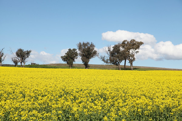 Our Country - Cootamundra.