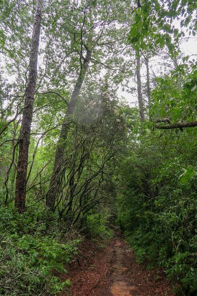 Barnett Branch Trail -- 3,230'