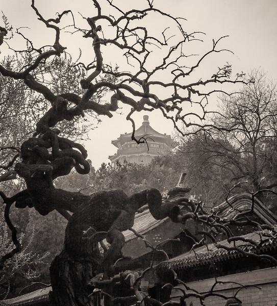 """Park Yiheyuan. Beijing. 14""""x15"""""""