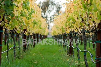 Robledo Family Winery, Sonoma California