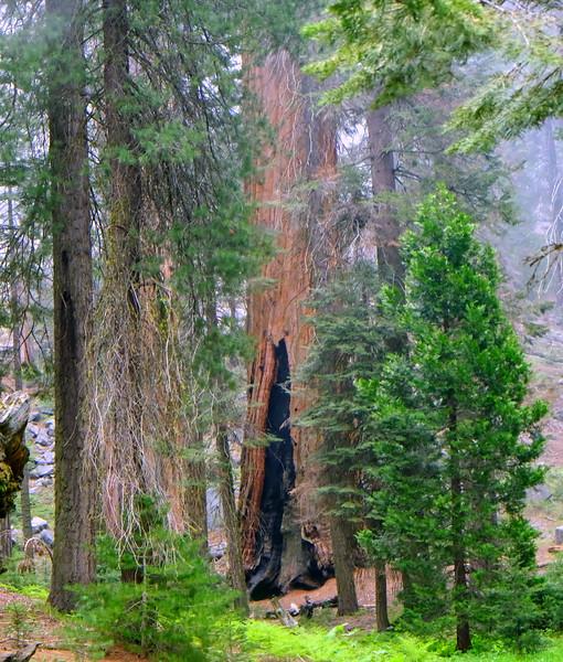 California Day 6 Sequoia 05-30-2017 114.JPG