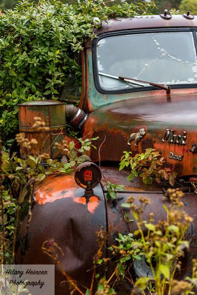 Truck Graveyard-93.jpg