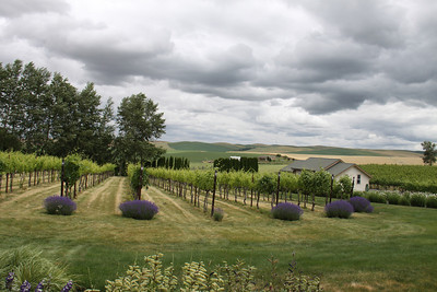 2013 Wine trip to Walla Walla (june)
