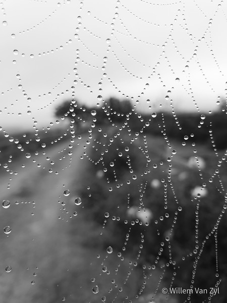20200606 Spiderweb with Dew Drops