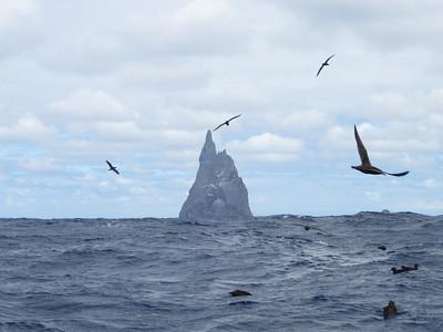 2012 January 1 Ball's Pyramid Pelagic (Lord Howe Island)