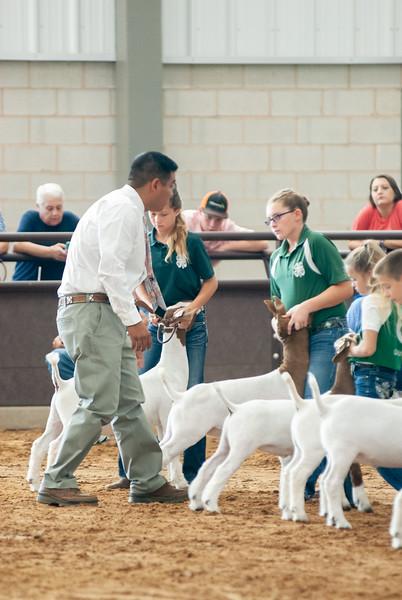 Tulsa_2019_goat_wether_showmanship-7.jpg