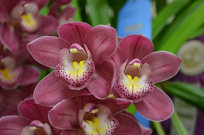 2014 Peninsula Orchid Society Flower Show