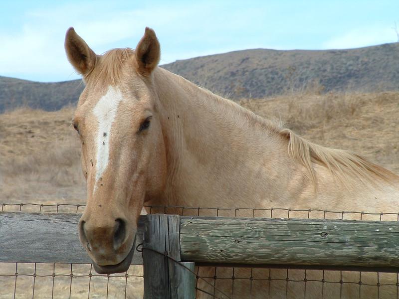 Horse at Bridgecreek Ranch, San Luis Obispo, California