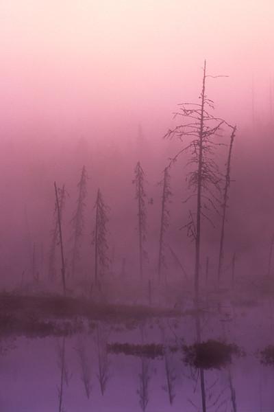 Brouillard au lever de soleil - près de Manic 5, Québec
