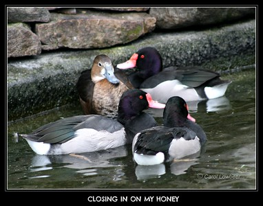 What Do Ducks have to say?