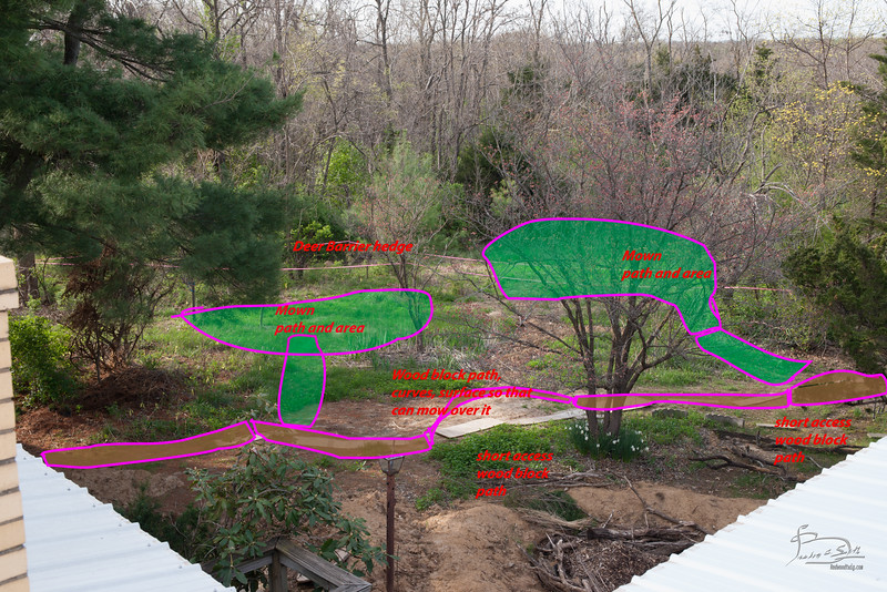Design concept of where paths go and what gets mowed in front yard.