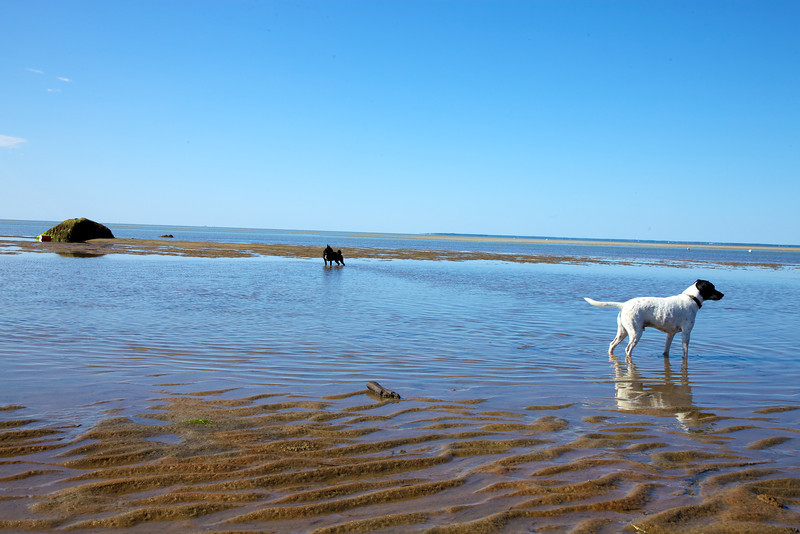 Cape Cod 2011 123.jpg