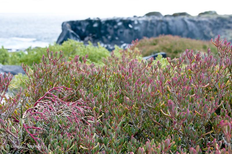 Vegetation and cliff at Punta Suarez, Espanola Island