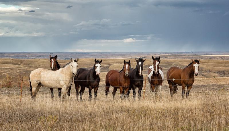 2018021900195516-Seven Horses full.jpg
